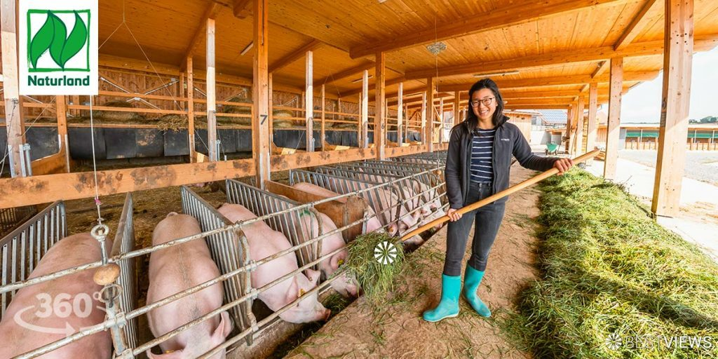 virtueller Bauernhof mit Öko-Schweinen in 360 Grad erleben